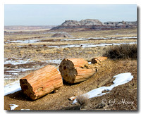 Petrified Forest  4